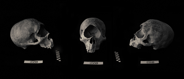 Chad Rossouw, Skull 2014, Lamda Print,