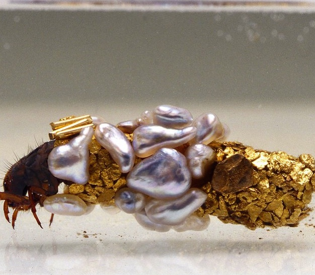 Hubert Duprat, <i>Caddis Worms Building Their Case</i>, 1980-2015. Gold dust, pearls in tank with water, Each cocoon is 2.5 cm long