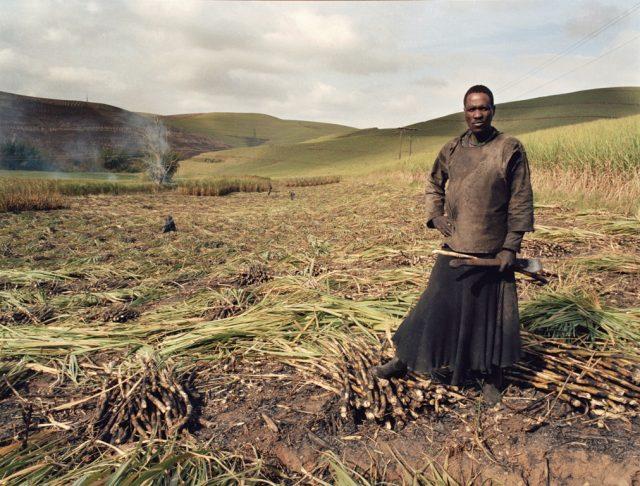 Zwelethu Mthethwa (from the Sugar Cane series), 2007. Chromogenic print