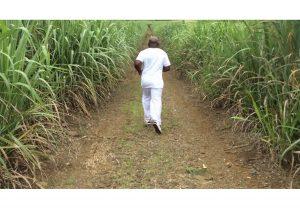 Barthélémy Toguo <i>Sugar Cane Sweat</i>, 2016. HD video, 2min 46sec.
