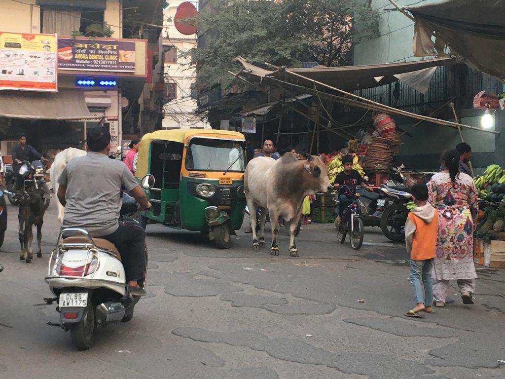 Sue Williamson's Diary: Ten Days in Delhi